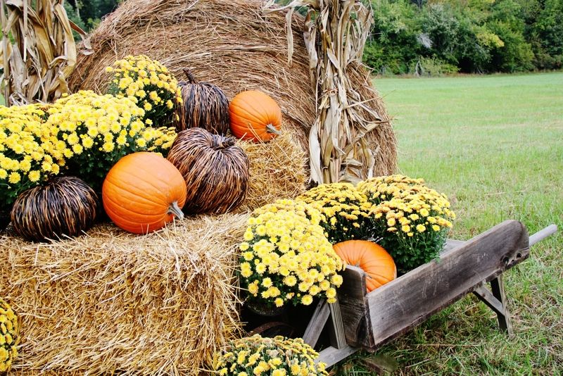 Fall Decorating Ideas for Outside (and a Funny Story Thistlewood farms - funny halloween decorating ideas