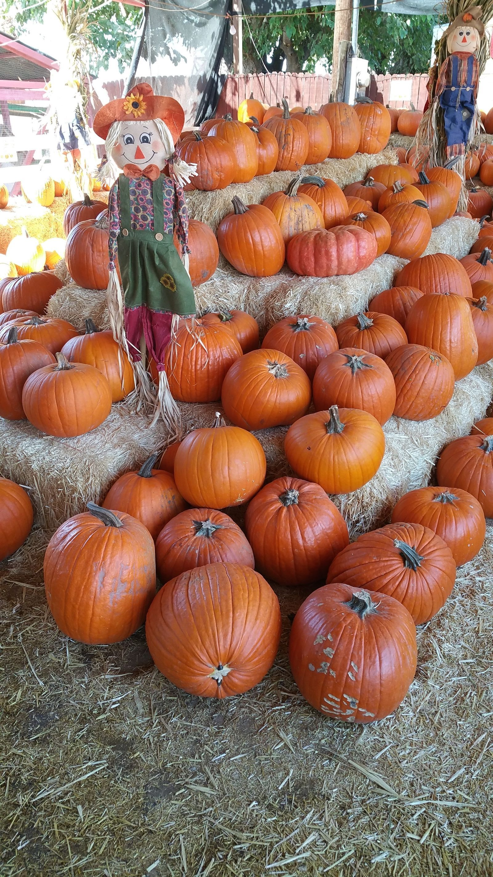The Best Pumpkin Patch in Your State (P.S. Some Even Have