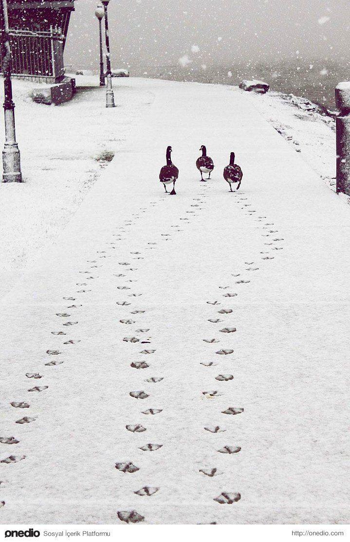 Winter und Tiere. 18 faszinierende Fotos