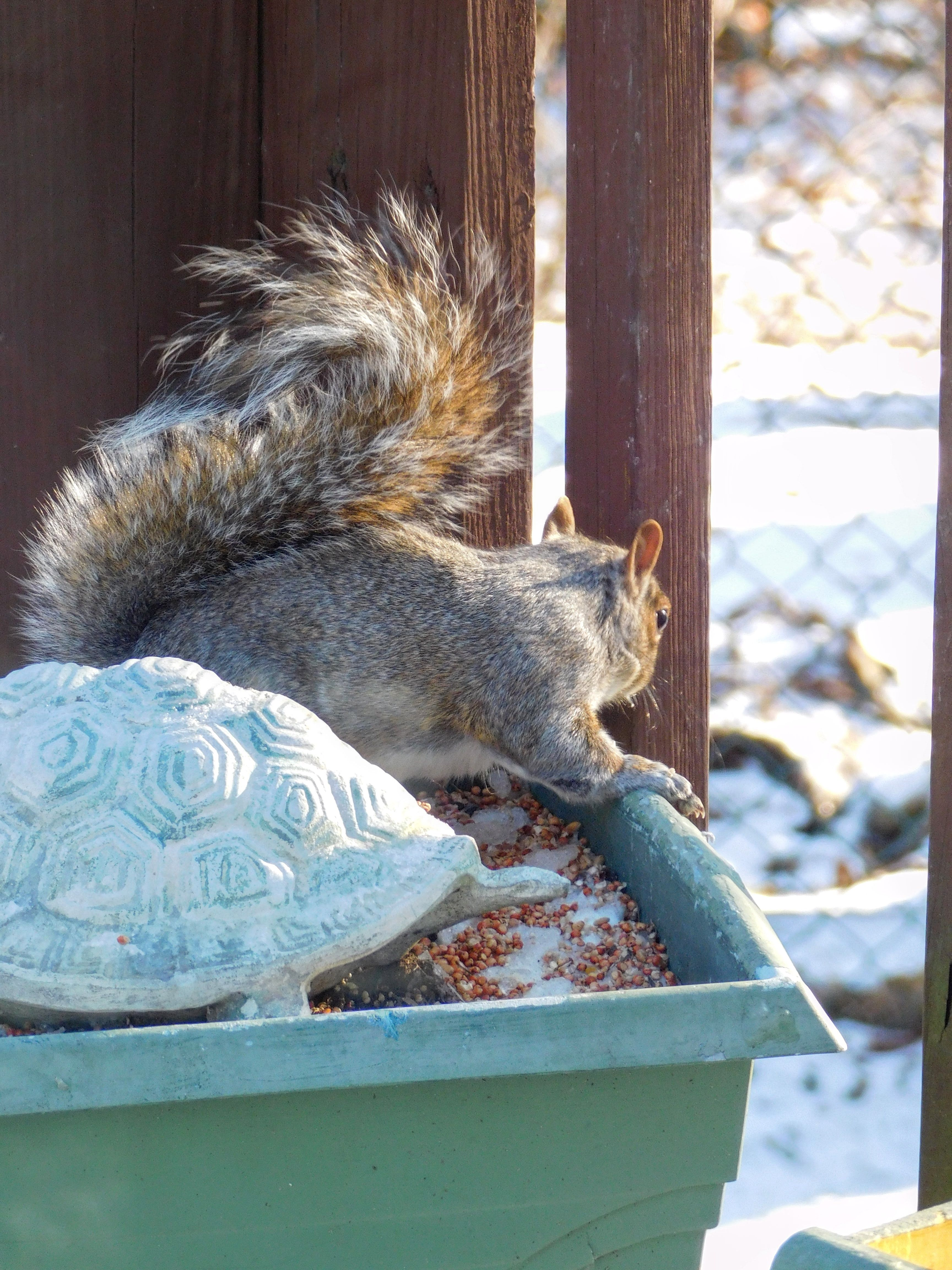 Squirrel Visiting After A Light Snow Fall Sdormans Photo - Student befriends campus squirrels then dresses them in the cutest outfits ever