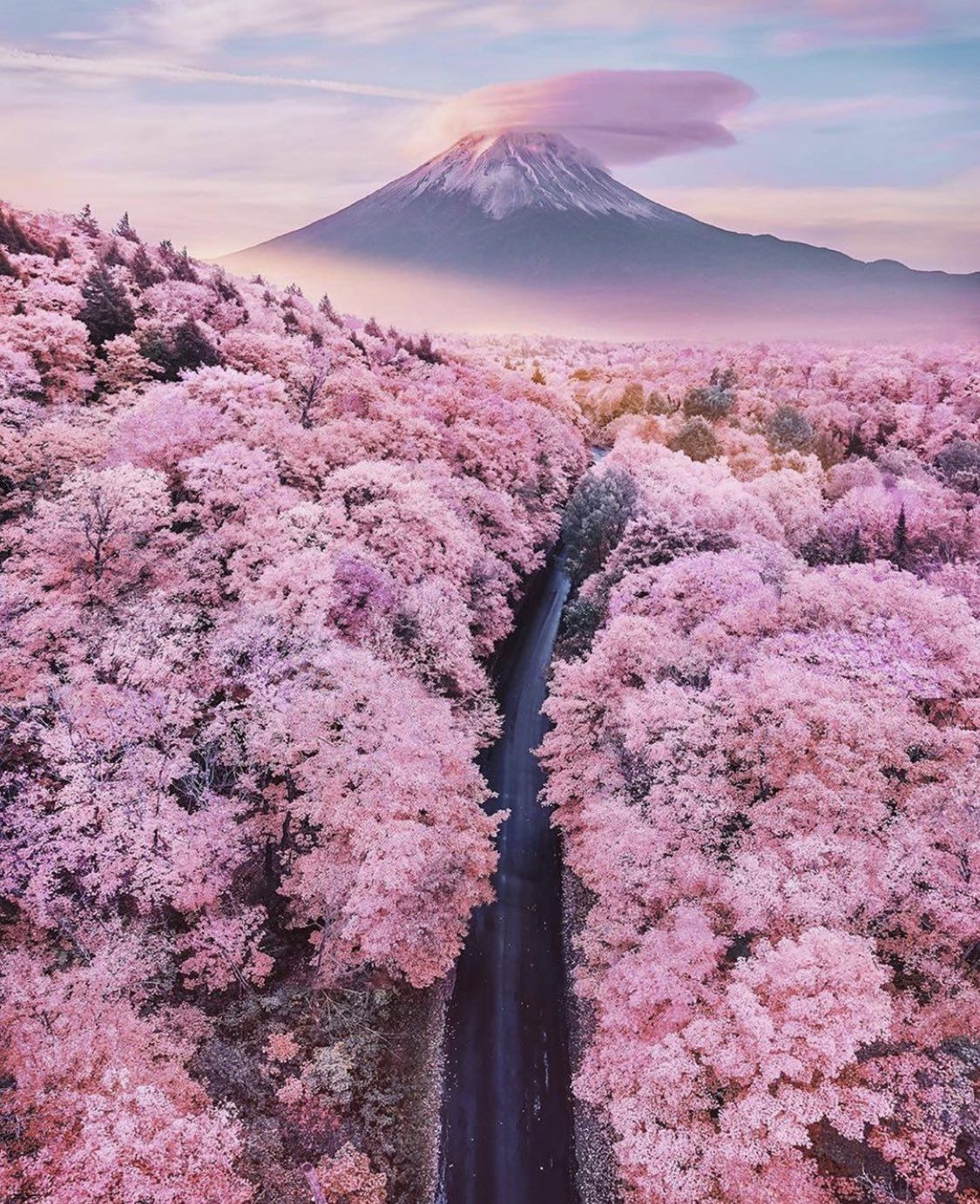 Justtravel On Twitter Cherry Blossom Japan Mount Fuji Beautiful Places