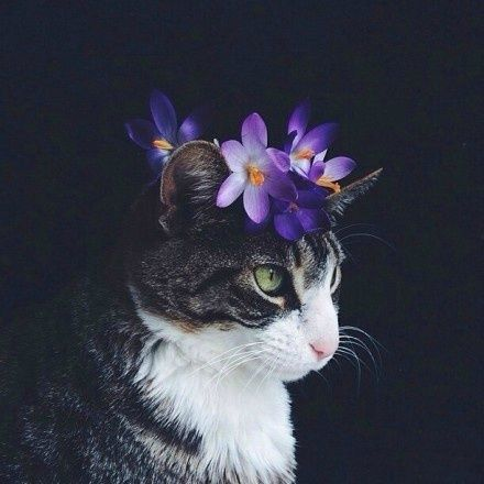 The Cat Has A Flower On His Head Cat Flower Cat Flowers Pretty Cats Cute Animals