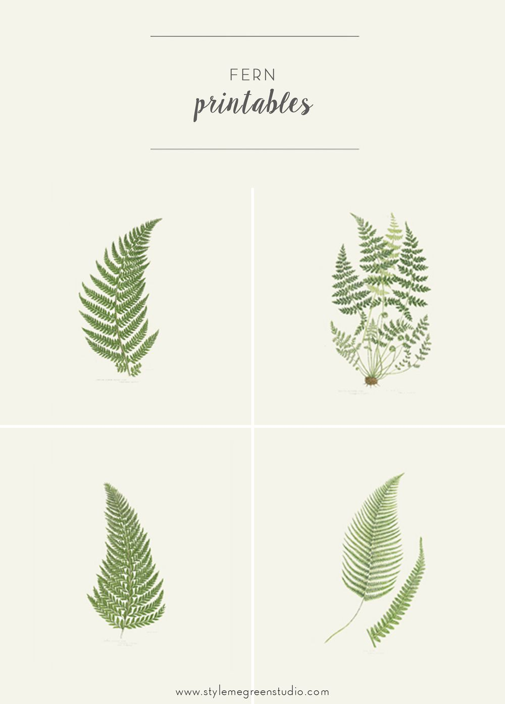 Fern Collection Free Printables Botanical Prints Free Prints