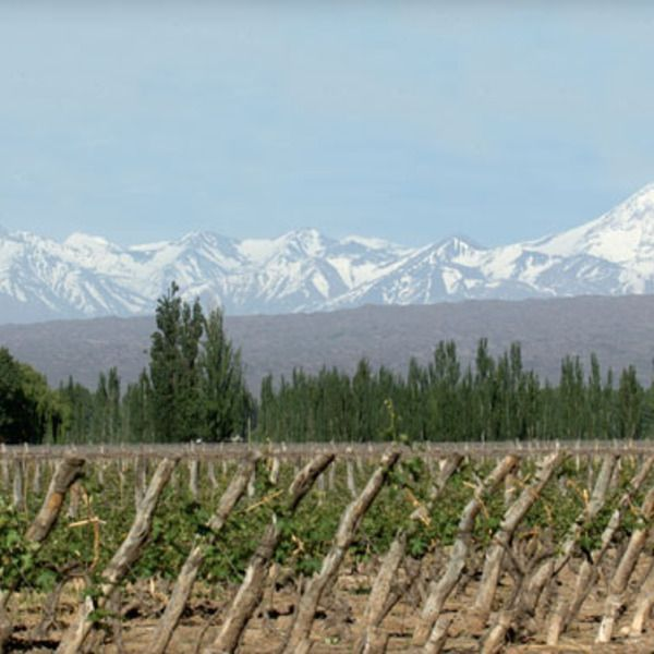 The Best Boutique Wineries in Mendoza