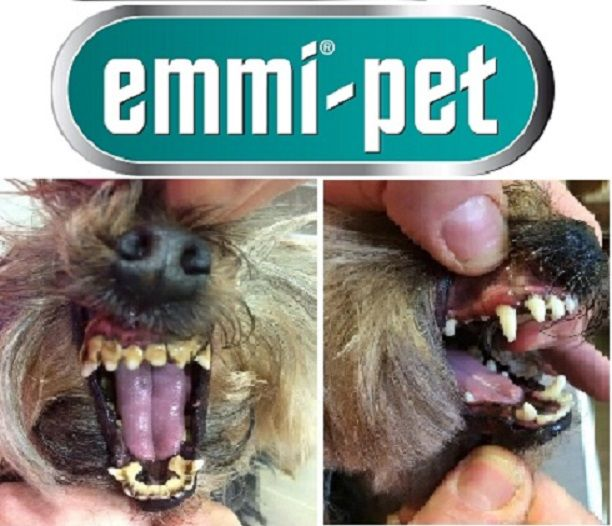 Emmipet difference! You ❤ your pets  We ❤ the results