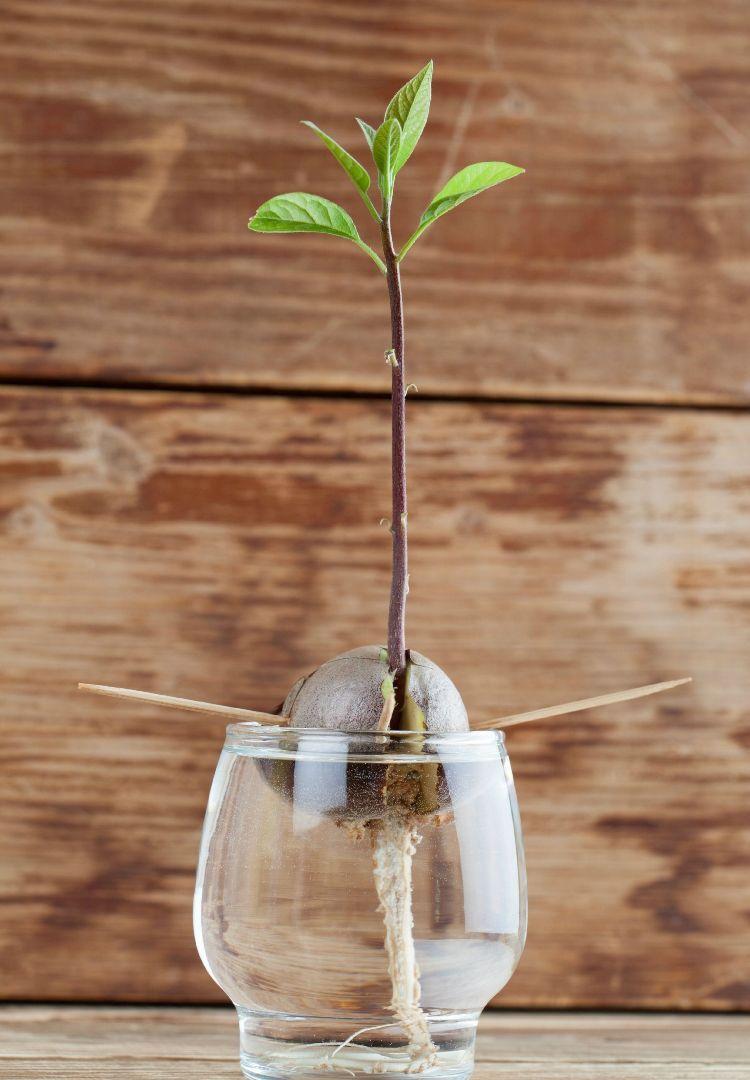 Welche Hydrokultur Zimmerpflanzen eignen sich für einheimischen Anbau?