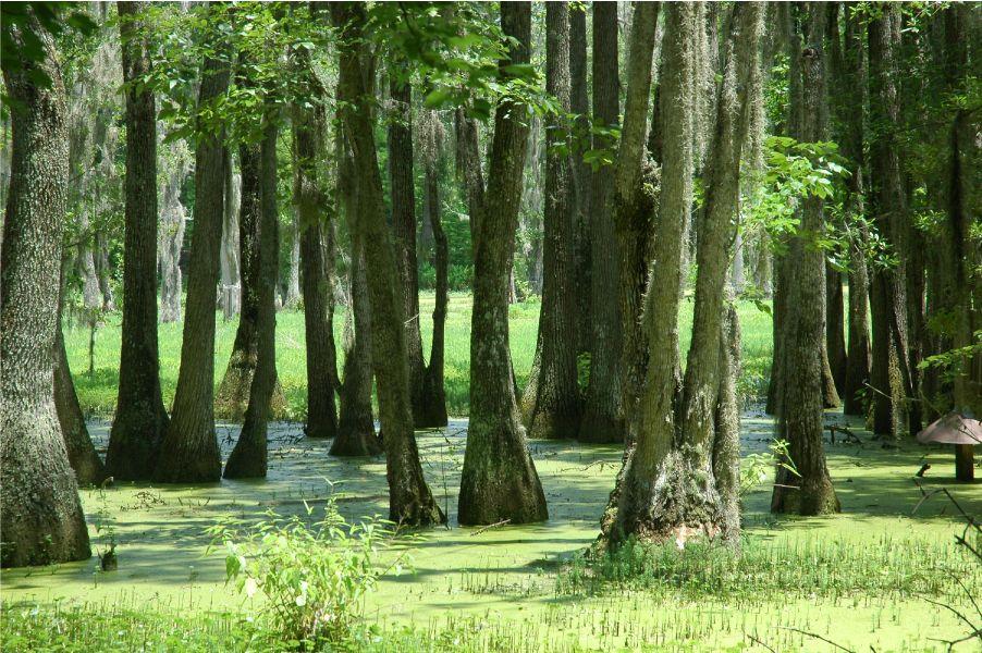 35d4714f870690cbd2c26aee3c29391c - Magnolia Plantation And Gardens Savannah Ga