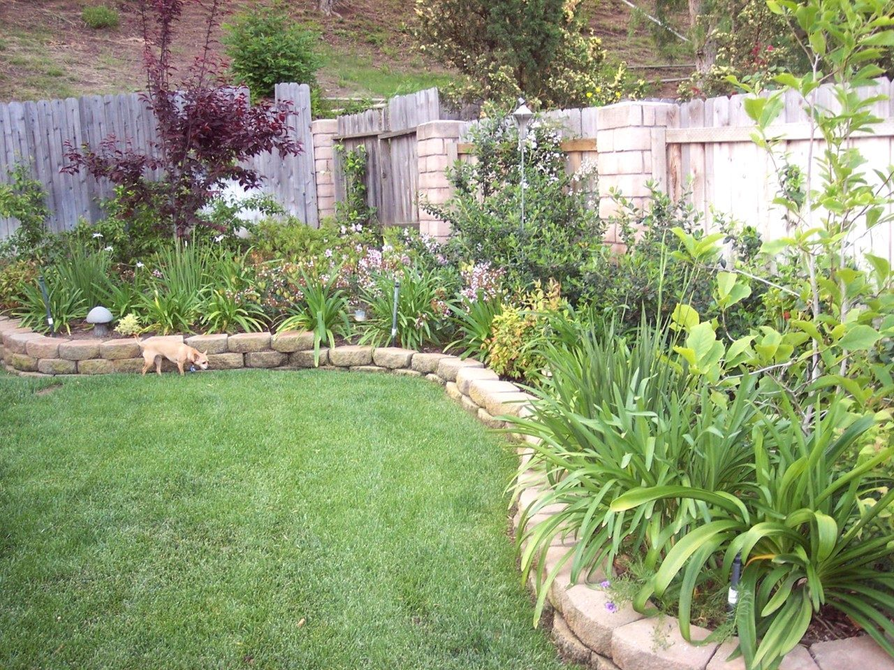 Backyard Landscaping Ideas Queensland Sample Picture Ideas And