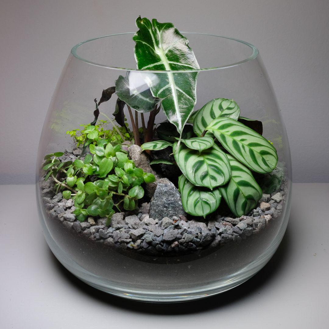 Open Terrarium Filled With Plants Terrarium Terrarium Plants