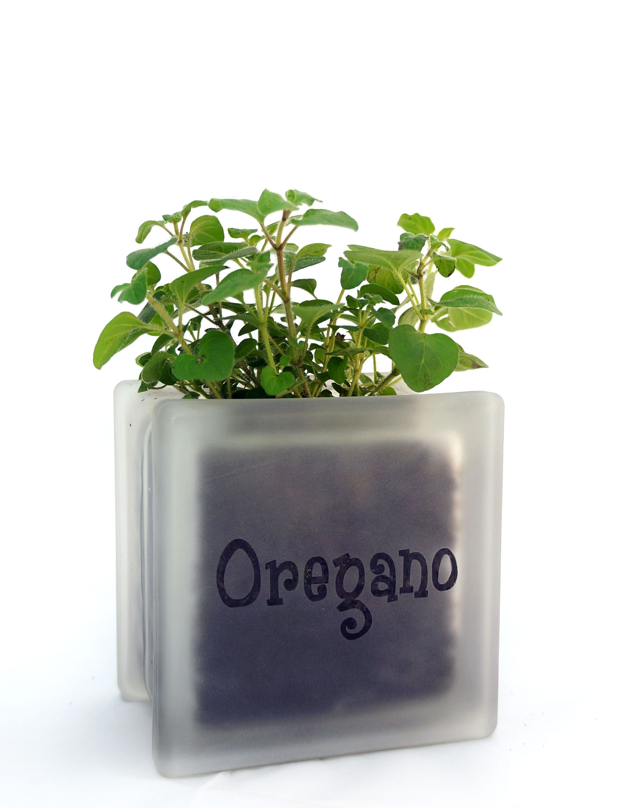 Indoor Gardening Gifts Gallery indoor gardening gardens and plants adorable mini glass block herb pot with oregano perfect for windowsills or as part of an indoor garden great gift for the green thumb person in your life workwithnaturefo