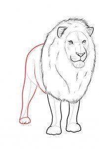 Lowe Zeichnen Schritt Fur Schritt Dekoking Lowe Zeichnen Lowe Skizze Zeichnen Schritt Fur Schritt