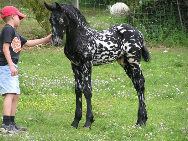 35+ Horses With The Most Beautiful And Unique Colors – Theyre Like None Youve Seen Before