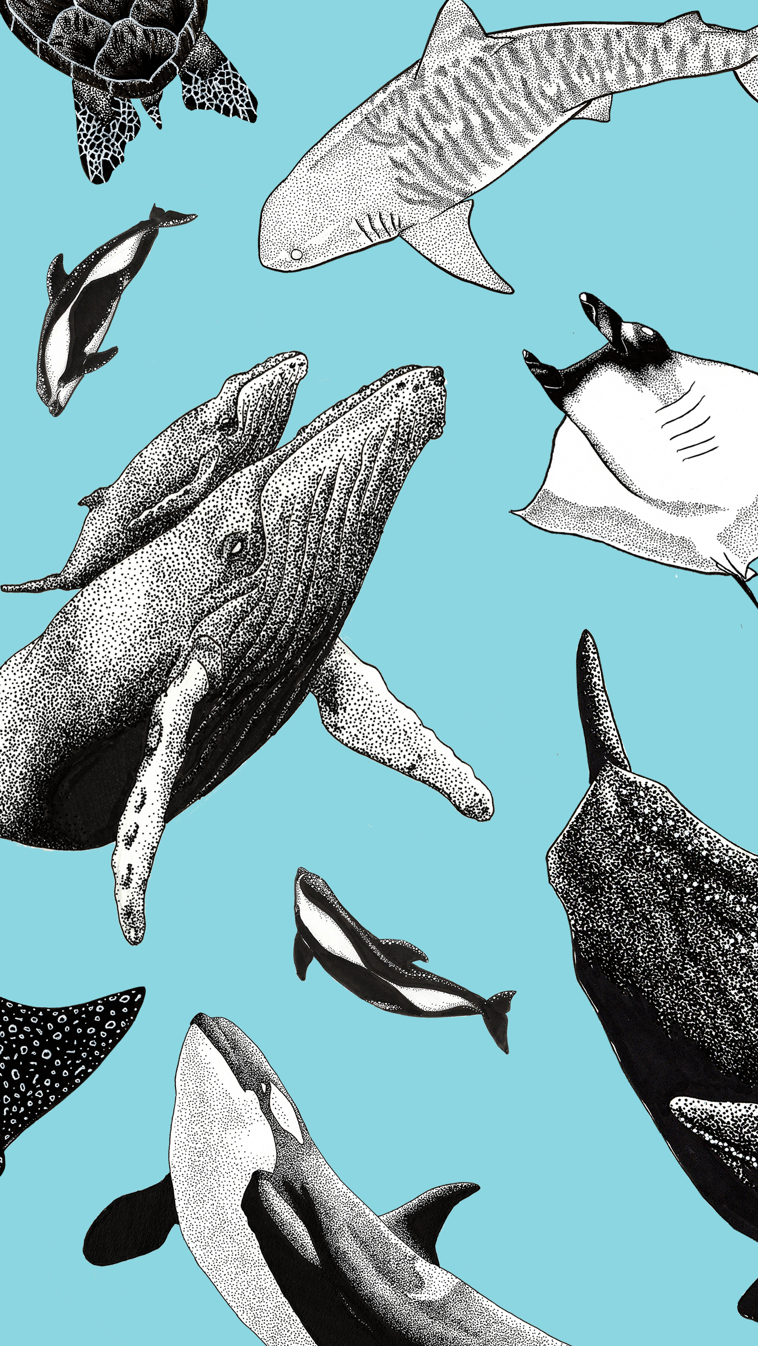 Collage of ocean artwork by Kohola Kai Creative formatted