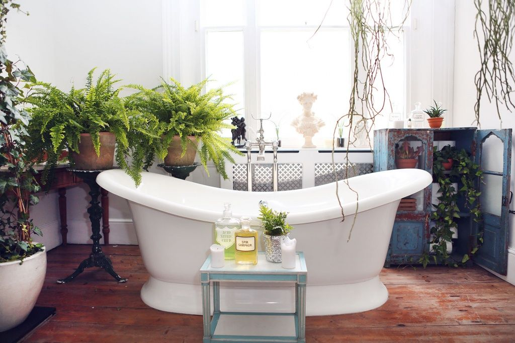 Houseplants That Thrive In Your Bathroom Indoor Plants Bathroom Bathroom Plants Best Bathroom Designs