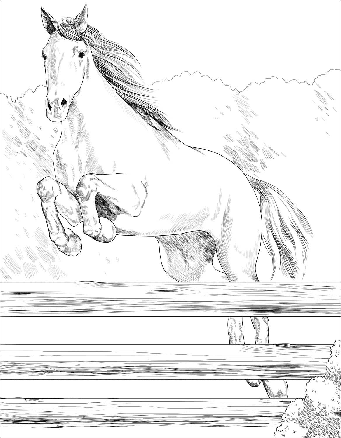 Irish Sport Horse coloring page Horse coloring, Horse