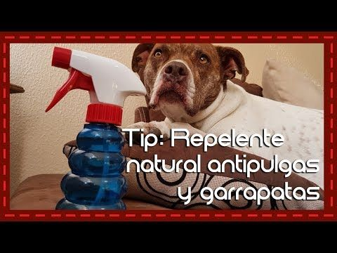 Tip Repelente Natural Antipulgas Y Garrapatas Youtube Pulgas