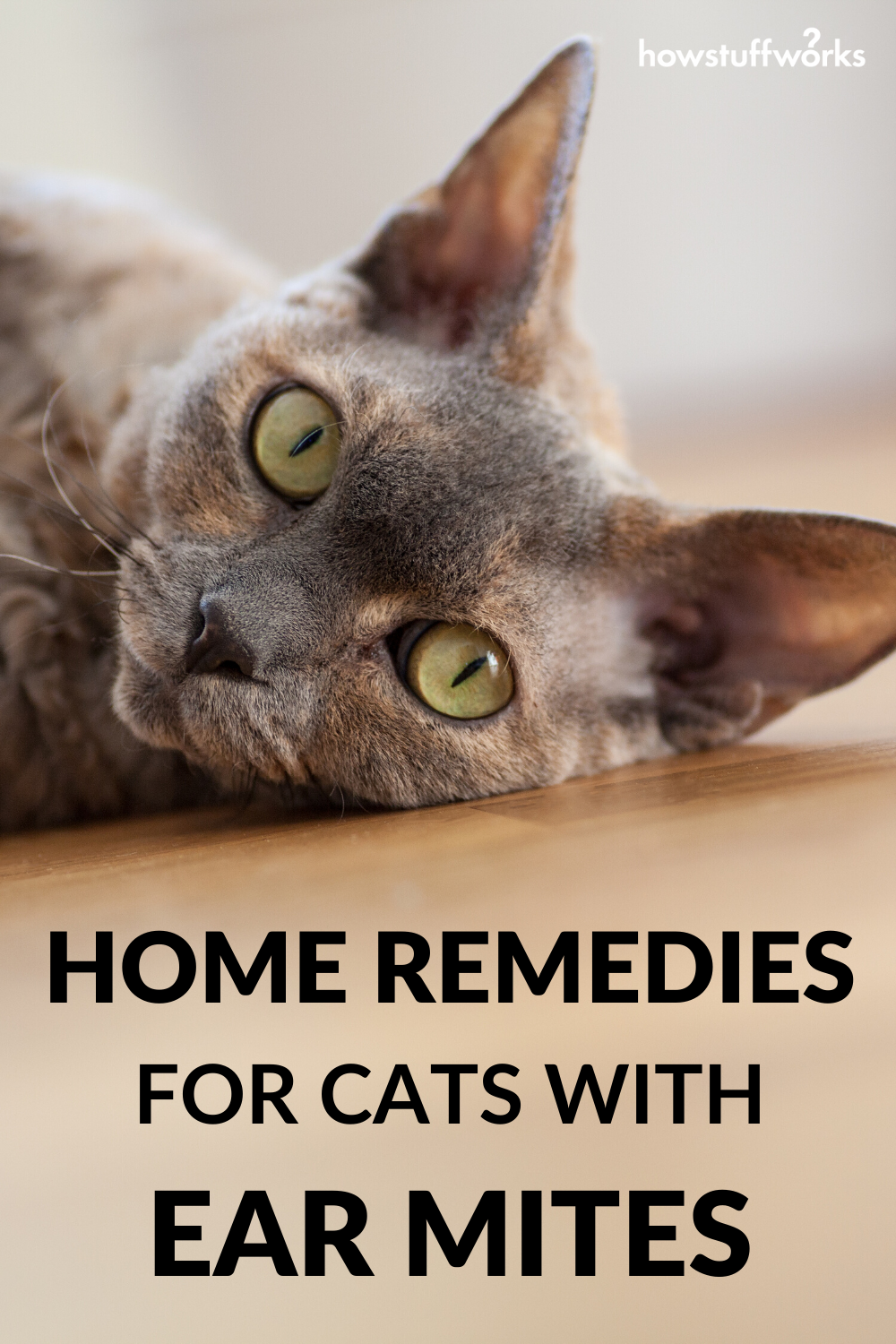 Home Remedies For Cats With Ear Mites In 2020 Sick Cat Cats Itchy Ears