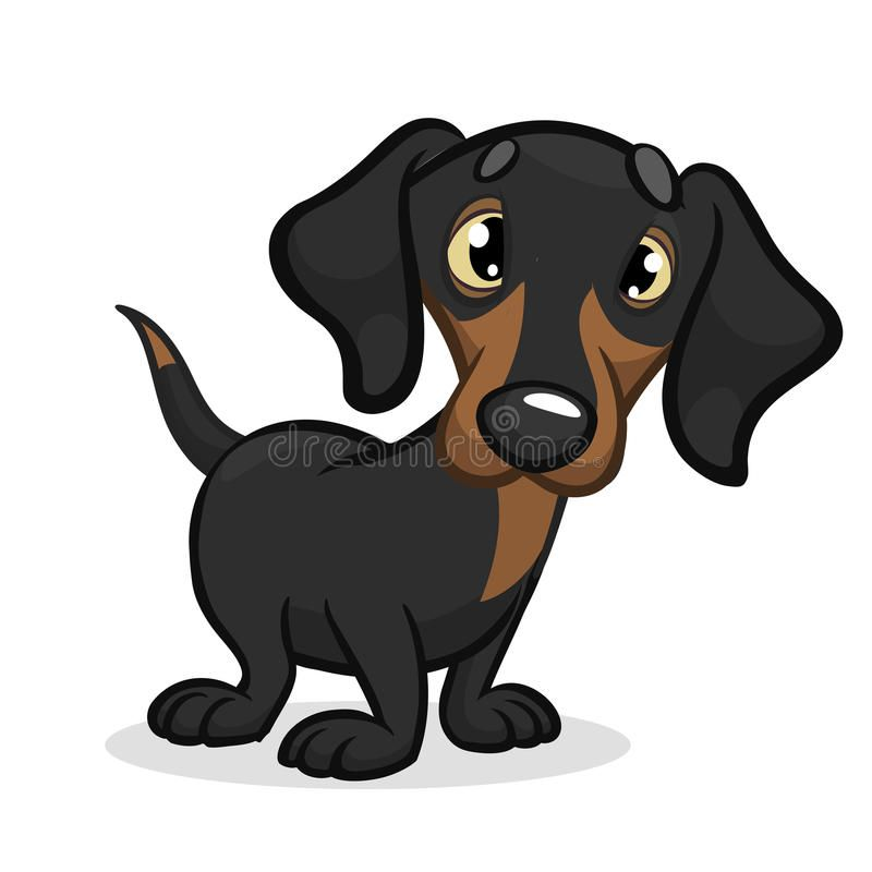 Cute Purebred Dachshund Dog With Images Dachshund Drawing