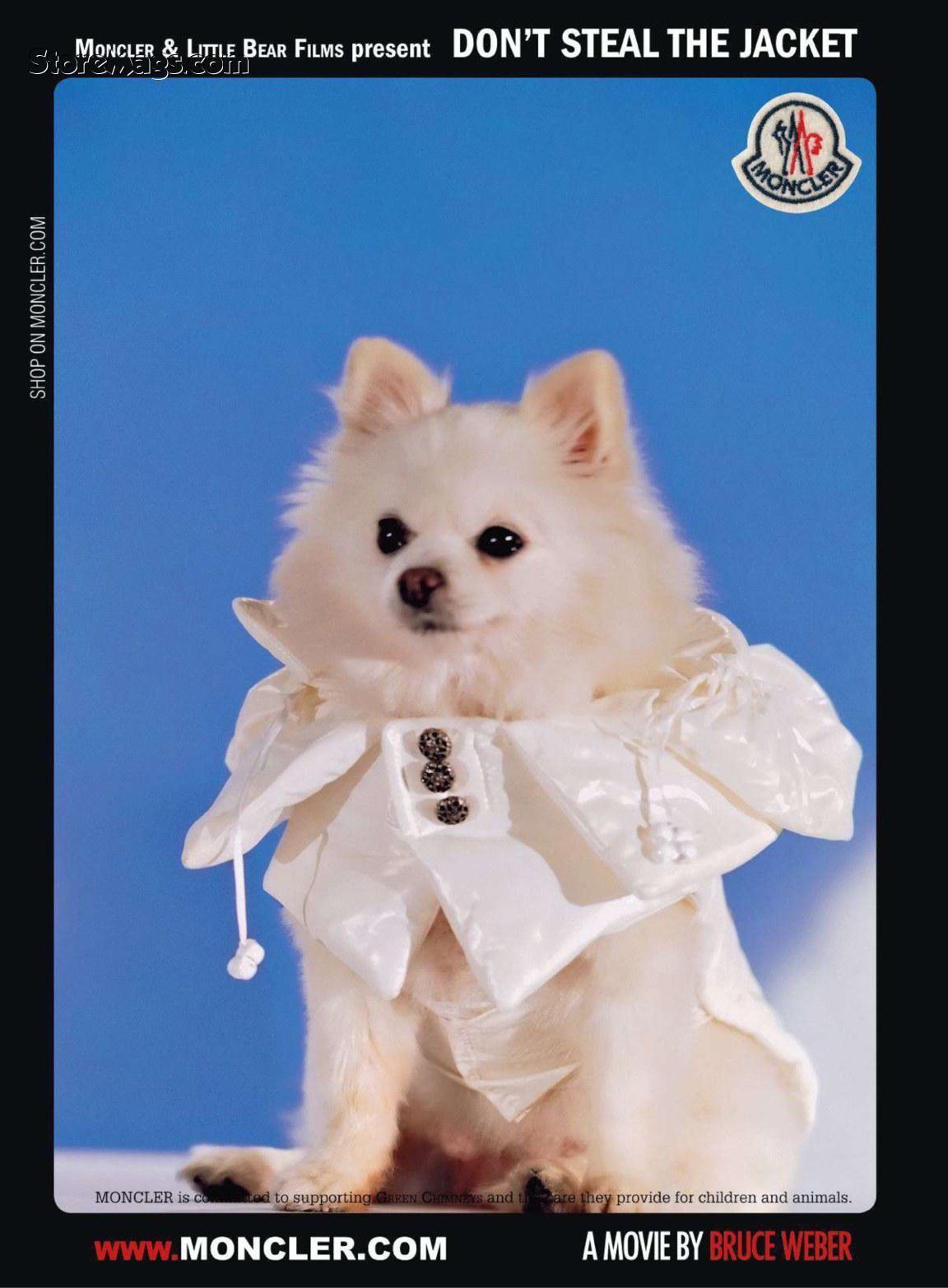 Dog wears..Moncler! | LOVE yr LOOKS! | Moncler, Advertising