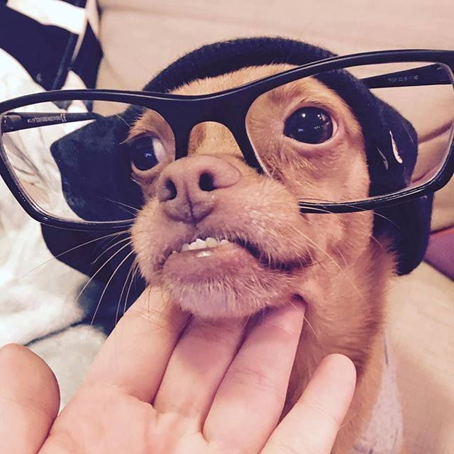 This is my Morgan Freeman look Found at: http://bit.ly/1RDZ3to #rescuedog #dog #itsarescuedoglife