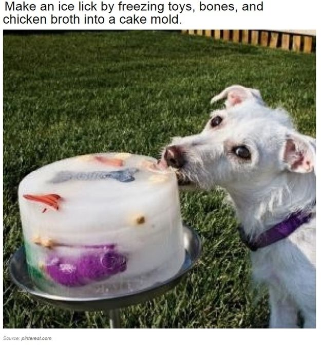 Make An Ice Lick On Hot Days For Your Little Buddy Dogs Pets