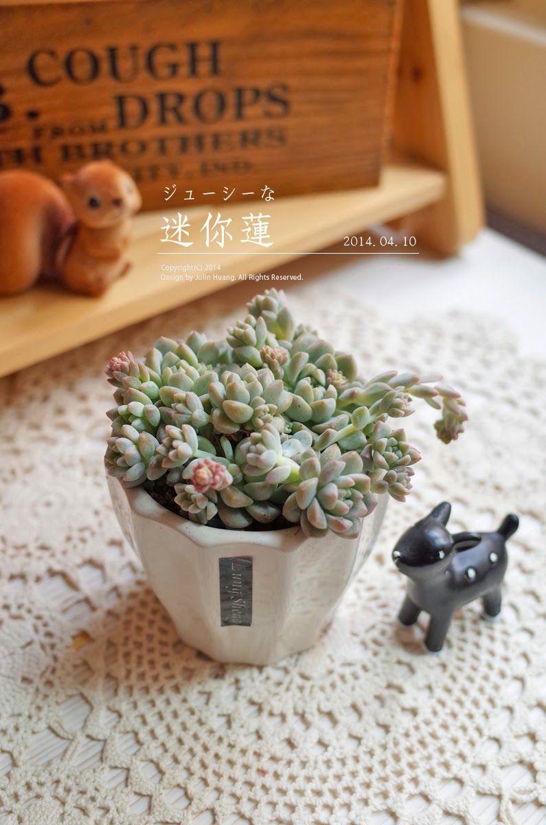 24 Amazing DIY Succulents in Teacups 24