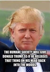 The humane society called. Its naked cats wants their hair back. For more Trump hair inspiration, visit the All In with Chris Hayes show at http://www.msnbc.com/all.