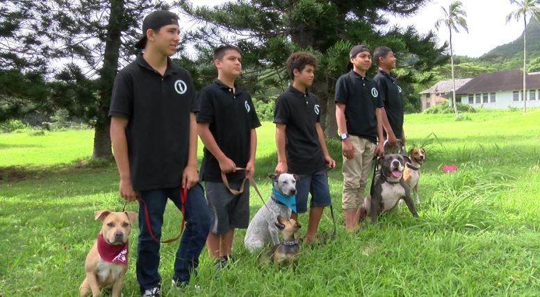 In Training Canine Minds At Risk Youth Learn Lessons Of The Heart