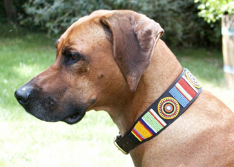 Beaded Leather Dog Collar In Circle Of Life African Dog Collars