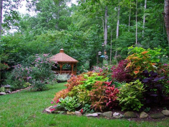 The Coleus Bed In August Plants and Gardens