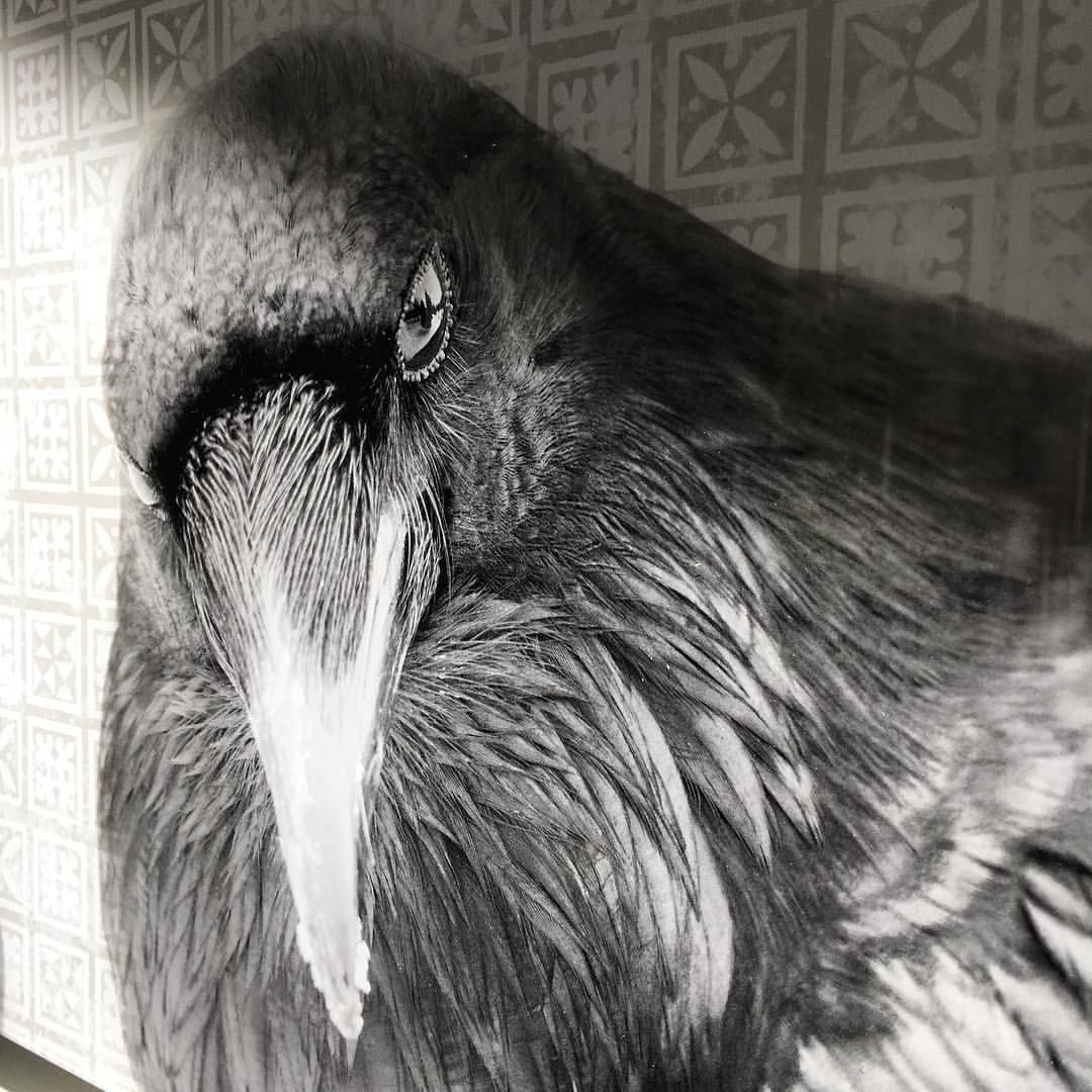 """June Hunter (@junehunterimages) on Instagram: """"Metallic plexiglass raven."""""""