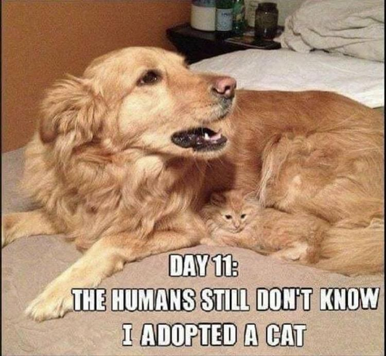 Best Funny Animals 49 Funny Animal Memes To Leave You Laughing | CutesyPooh 49 Funny Animal Memes To Leave You Laughing | CutesyPooh 3