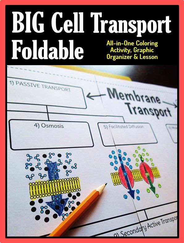 Cell Membrane Transport Big Foldable for Interactive