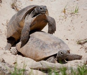 Florida Native Plant Society Blog: Life in the Slow Lane ...