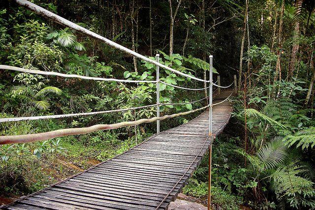 tijuca forest - Google Search