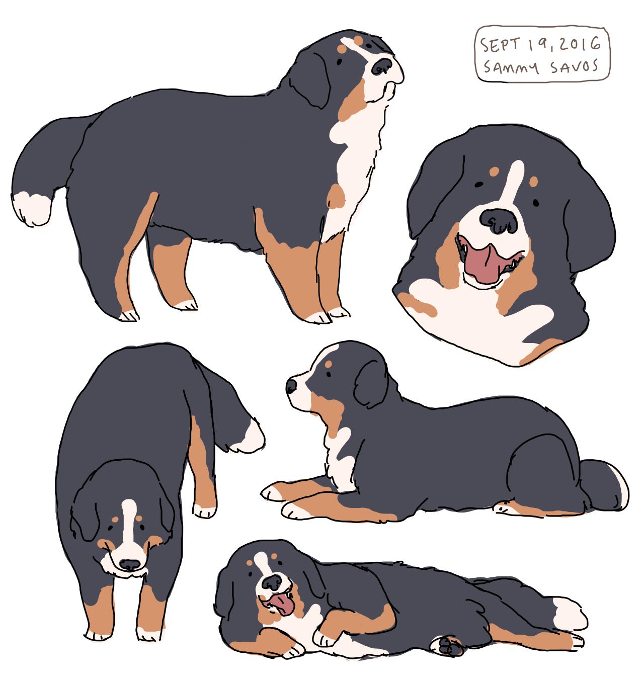 Bernese Mountain Dogs Animeal Cartoon Dog Animal Drawings Dog Art