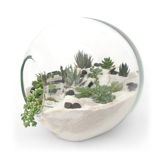 Globe succulent terrarium