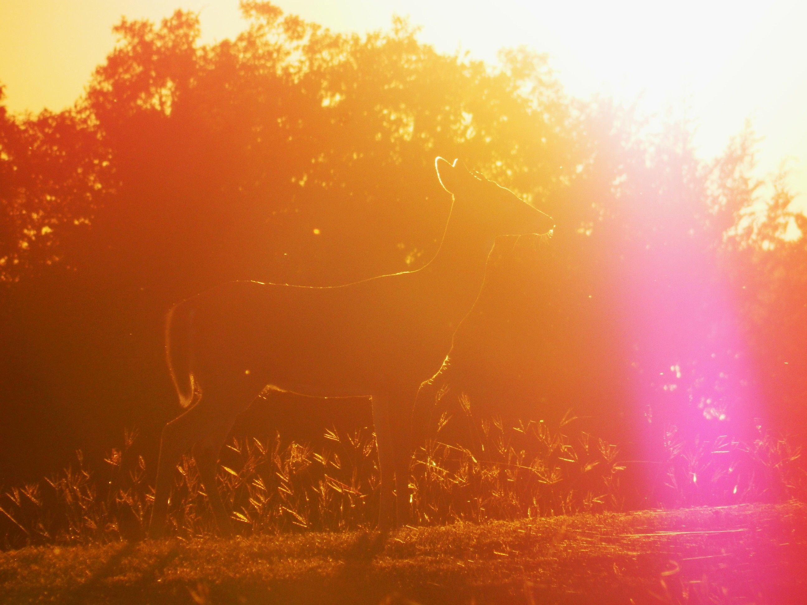 A deer in the sun