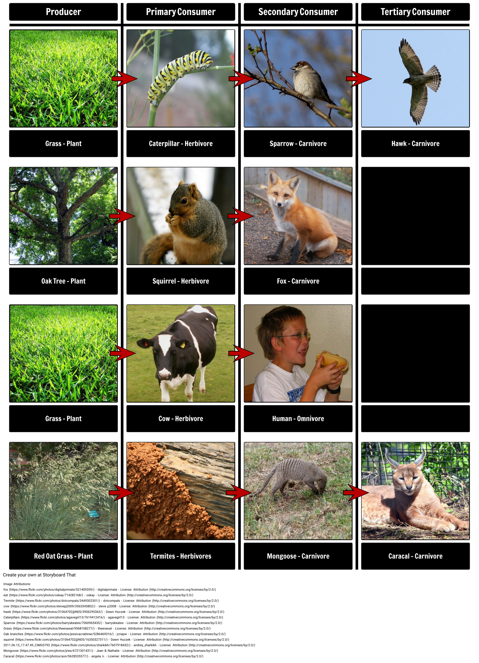 Food Chains and Webs Food Chain Examples In this