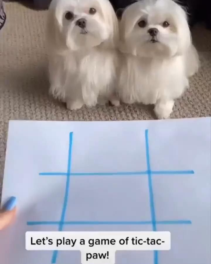 Two smart dogs playing tic-tac-toe