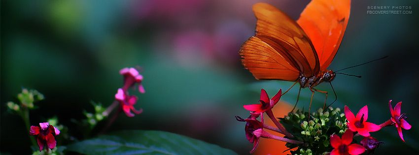 Looking For A High Quality Orange Butterfly Pink Flowers Facebook Cover You Just Found One Make Y Facebook Cover Photos Flowers Cover Photos Fb Cover Photos