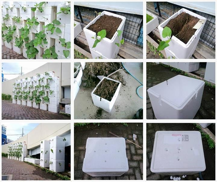 Vertical Gardening With Styrofoam Containers Vertical Garden Garden