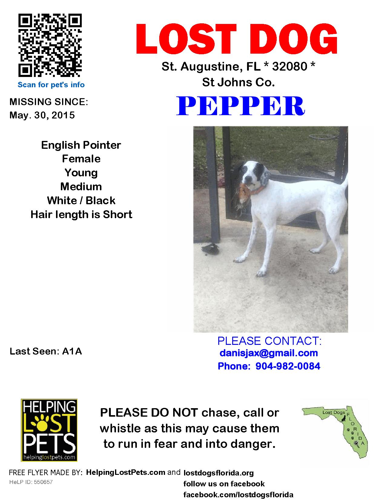 Lost Dog Female St. Augustine, FL, USA 32080 Losing