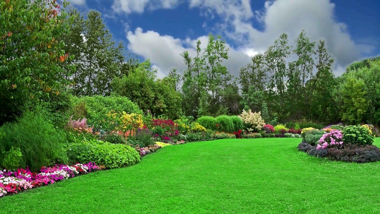 Beautiful, Natural, Flower Garden, Background Video, 1080p