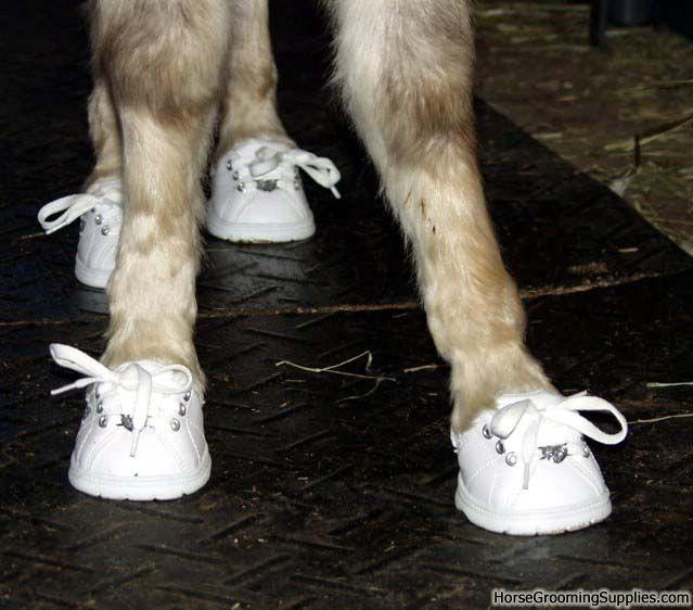 Mini horse wearing Build-A-Bear shoes.   Barn Ideas & info ...