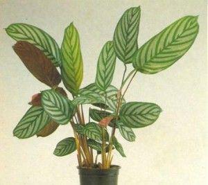 5 plantas t xicas para los perros que son comunes en las for Cuales son las plantas para interiores