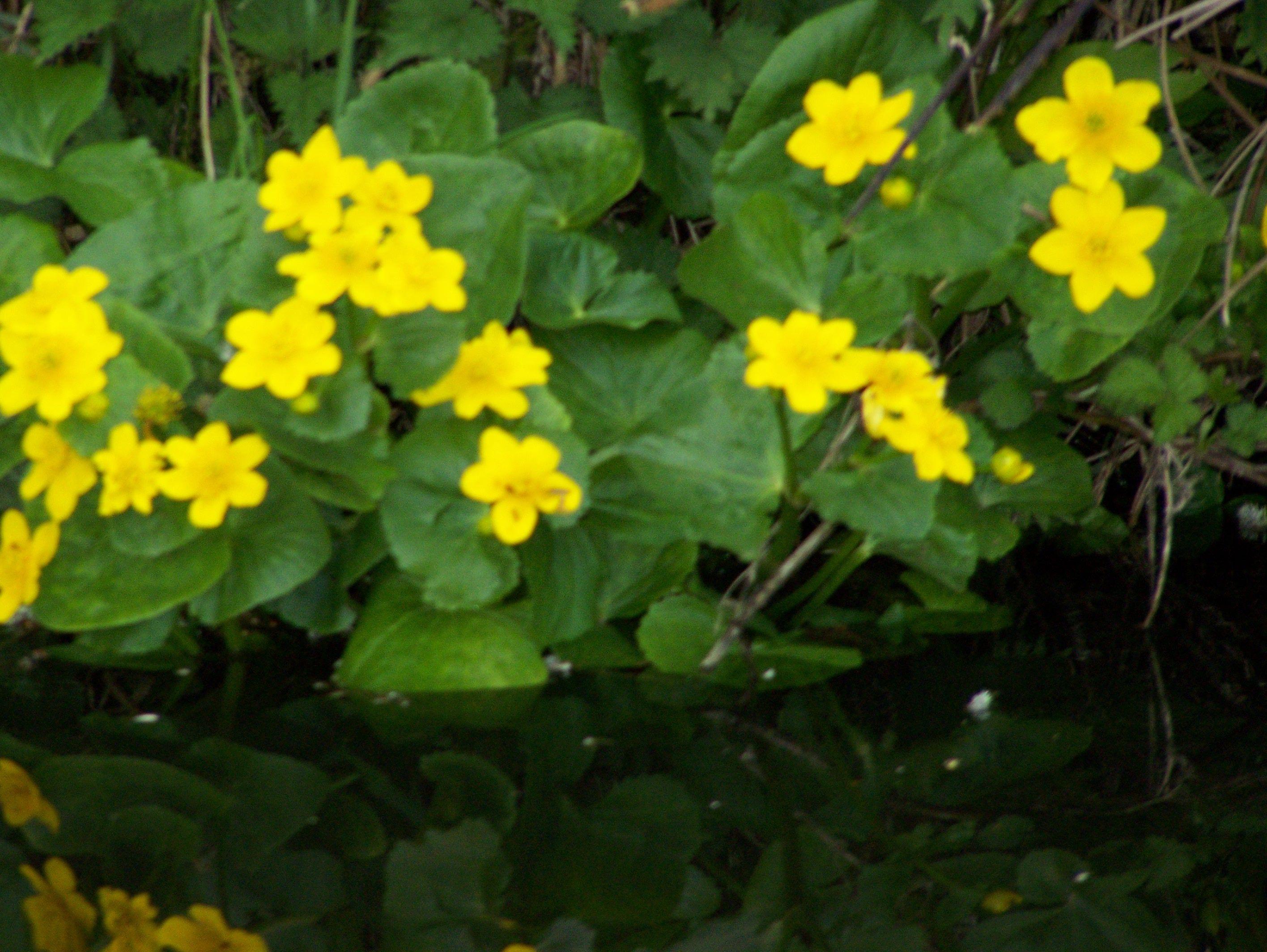 River side flowers