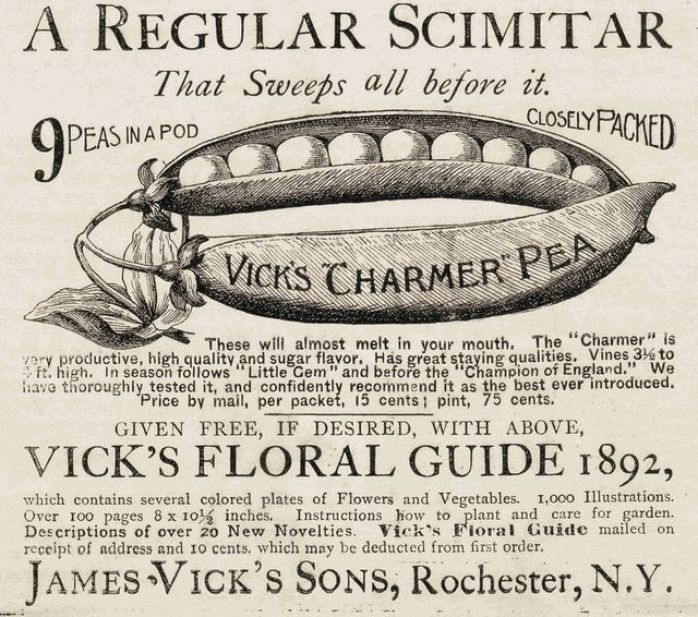 VICKS CHARMER PEA from January 7th 1892
