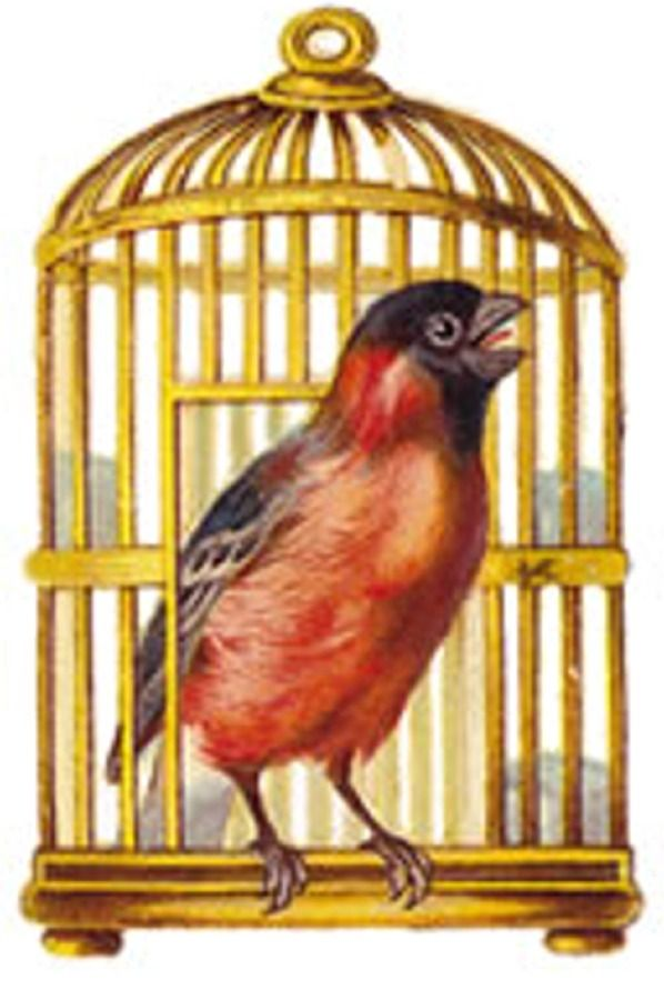 vintage bird and bird cage printable im looking for ornaments that i can makeprint and glue - Printable Bird Pictures 2