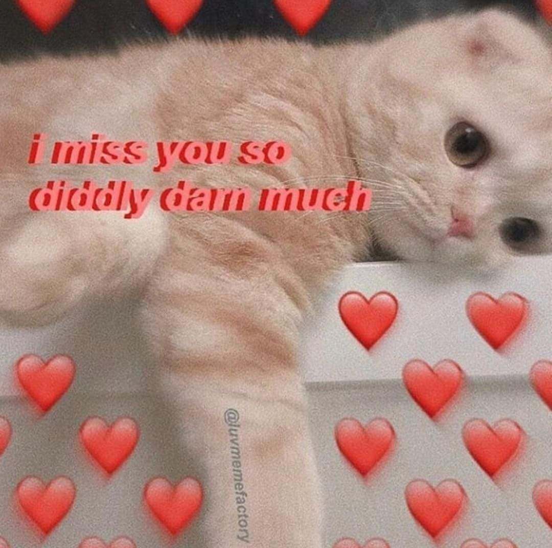 Cute Kitty Thank You Meme